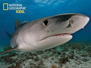 National Geographic Jigsaw - Shark