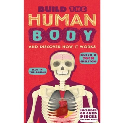 Whirligig Toys - Build A Human Body 1