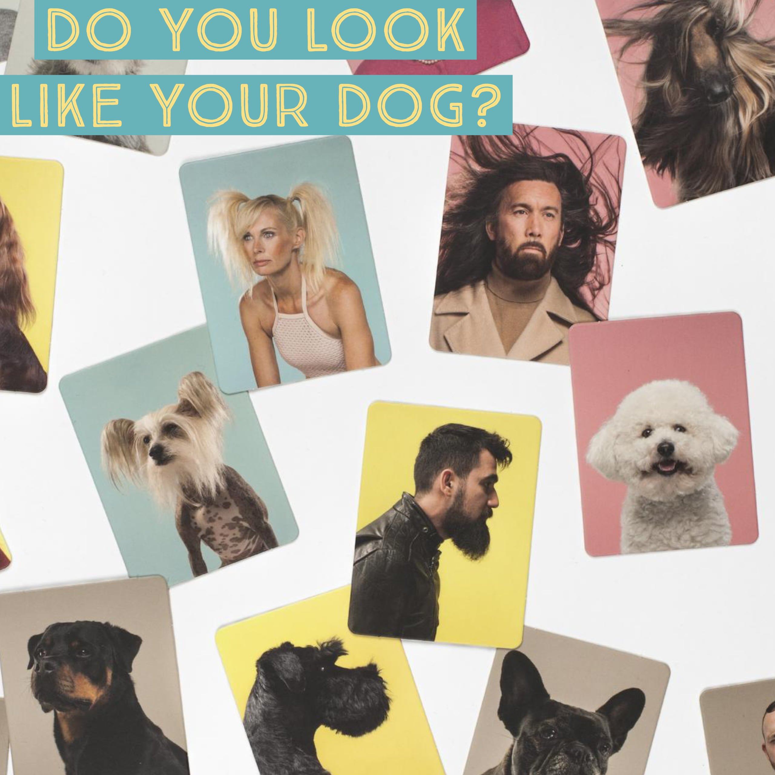 Whirligig Toys - Do You Look Like Your Dog?