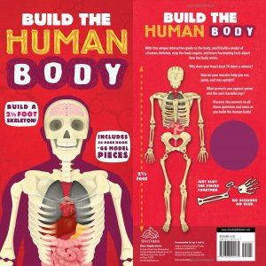 Whirligig Toys - Build the Human Body