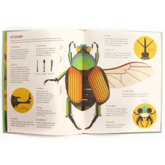 Whirligig Toys - Bonkers About Beetles2
