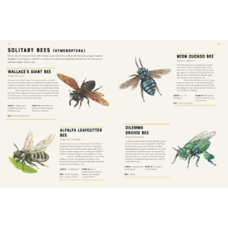 Whirligig Toys - Encyclopedia Of Insects2