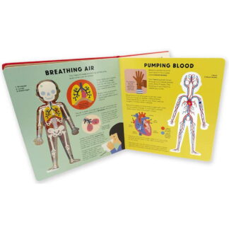 Whirligig Toys - The Body Book3