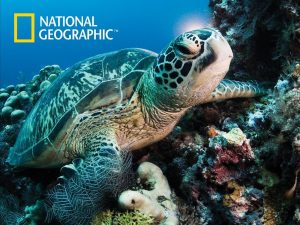 3D Turtle Puzzle - National Geographic